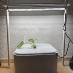 初めての水耕栽培 〜1日目 MASUCOにメロン苗を設置する〜